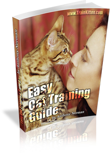 Easy Cat Training Guide